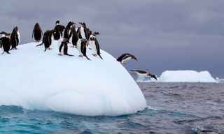 South Georgia And Antarctic Peninsula: Penguin Safari Via Buenos Aires