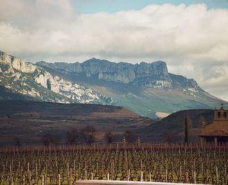 Vineyards Of La Rioja Cycling