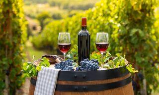 Gourmet Walking In Burgundy's Vineyards