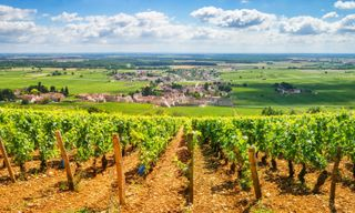 Cycling In Beaune Vineyards
