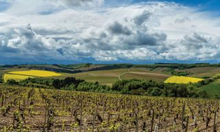 Cycling In Chablis Vineyards