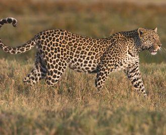 Zimbabwe, The Wild Zambezi & Victoria Falls With Awf