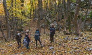 Rewilding The Apennines
