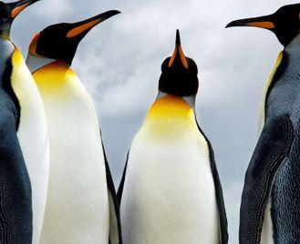 Falklands, South Georgia And Antarctic Peninsula