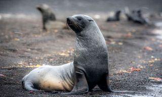 Falklands, South Georgia And Antarctic Peninsula - M/V Ushuaia
