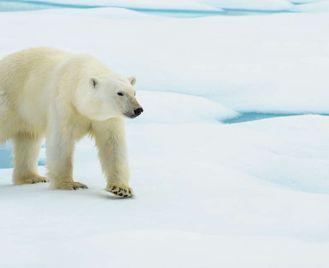 Realm Of The Polar Bear In Depth - M/V Greg Mortimer