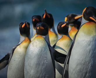 Falklands, South Georgia And Antarctica - M/V Greg Mortimer