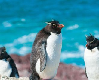 Falklands, South Georgia And Antarctic Circle - M/V Greg Mortimer