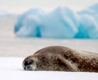 Classic Antarctica - Eclipse Departure - M/V Sylvia Earle