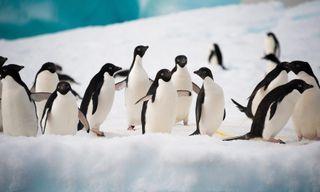 Antarctica Complete - M/V Sylvia Earle