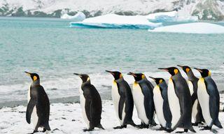 Falklands And South Georgia - M/V Sylvia Earle