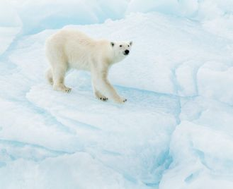 Spitsbergen And Greenland - Expedition