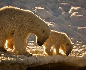 Spitsbergen, Greenland And Iceland - M/V Greg Mortimer