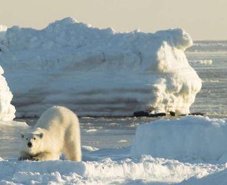 Realm Of The Polar Bear - Expedition