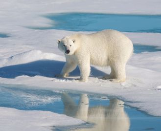 Realm Of The Polar Bear In Depth - Expedition
