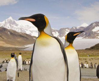 Falklands, South Georgia And Antarctica - Expedition