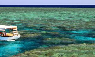 Coral Expeditions - Reef & Rainforest