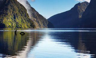 Essential New Zealand