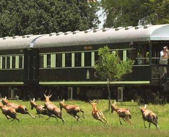 Luxury Rovos Rail, Cape & Safari