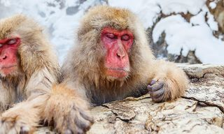 Snow Monkeys & Mountains