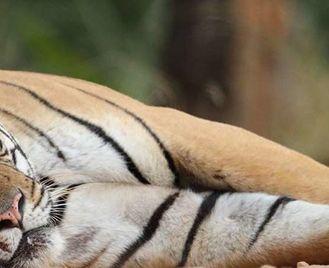 Unexplored Wildlife of India