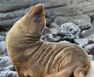 Galápagos — South & East Islands Aboard The Monserrat