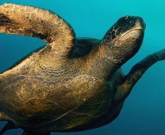 Galápagos — Central Islands Aboard The Xavier Iii
