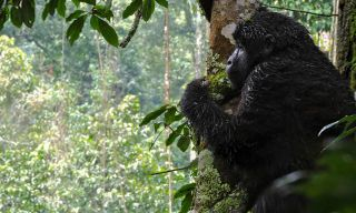 Kenya & Uganda Gorilla Overland: Forests & Wildlife Spotting