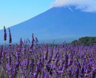 Discover Japan & Hike Mt Fuji