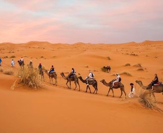 Moroccan Desert Adventure: River Canyons & Camels