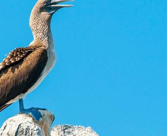 Galápagos – West And Central Islands Aboard The Reina Silvia Voyager (Cruise Only)