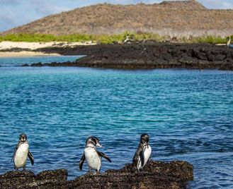 Galápagos – Central And East Islands Aboard The Reina Silvia Voyager