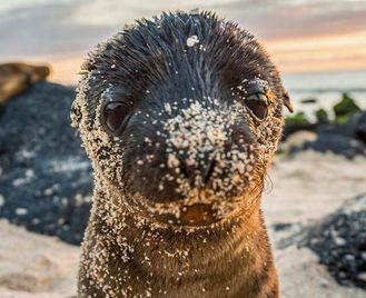 Galápagos – West And Central Islands Aboard The Reina Silvia Voyager