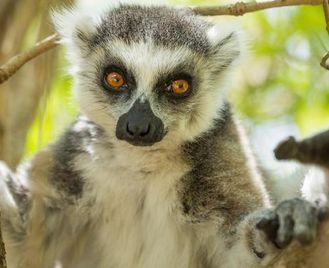 Northern Madagascar Explorer
