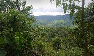 La Selva Lodge - 4 Day Independent Adventure