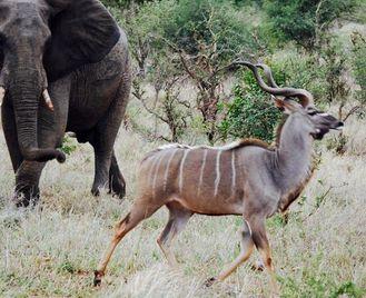 Kruger And Swazi Overland: Mountains & Village Culture