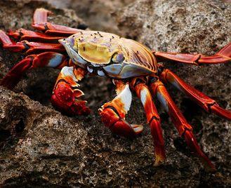 Galapagos Taster | 9 days | £2,820pp