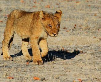 Classic Namibia Self Drive | 14 days | £3,342