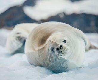 Antarctic Explorer from Ushuaia 11 day