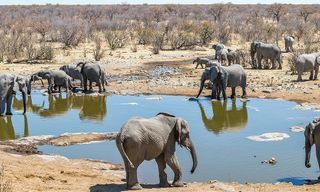 South Africa Family Safari with Teenagers