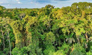 Ecuador: Amazon Jungle Sacha Lodge Short Break