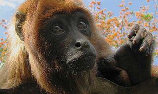 Bolivia: Amazon Jungle Short Break