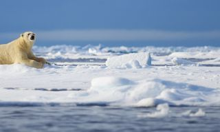 Spitsbergen in Depth