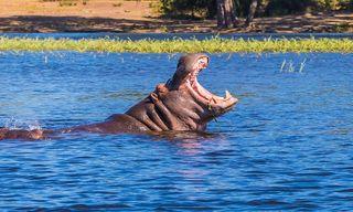 Chobe National Park Short Break