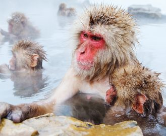 Japan: Land of the Snow Monkeys
