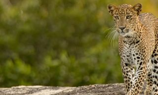 Sri Lanka Expedition: Wilderness & Wildlife
