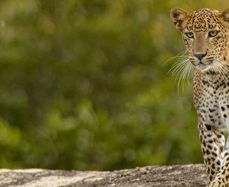 Sri Lanka Expedition: Wilderness & Wildlife