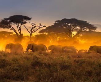 Kenya: Wildlife Rangers Expedition