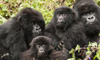 Remarkable Rwanda & Gorillas of Uganda
