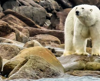 Russian High Arctic Odyssey